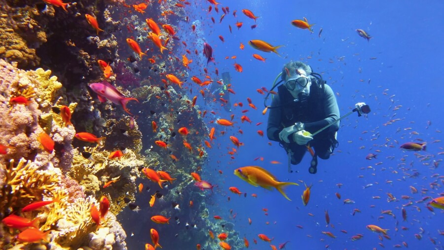 Vibrant reef colors, fish and scuba diver